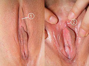 Sex midget prositution